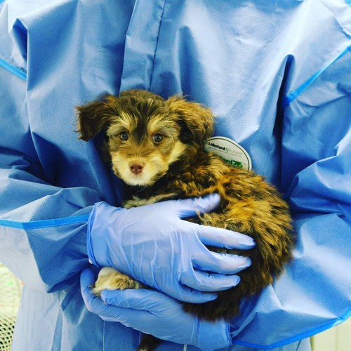 New 24-Hour Animal Hospital Set to Open in Jindalee